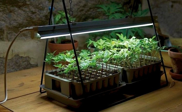 Led Grow Lights Technology Was Invented By Nasa For Growing Plants In The Condition Where Natural Light Can T Be Available And From Past A