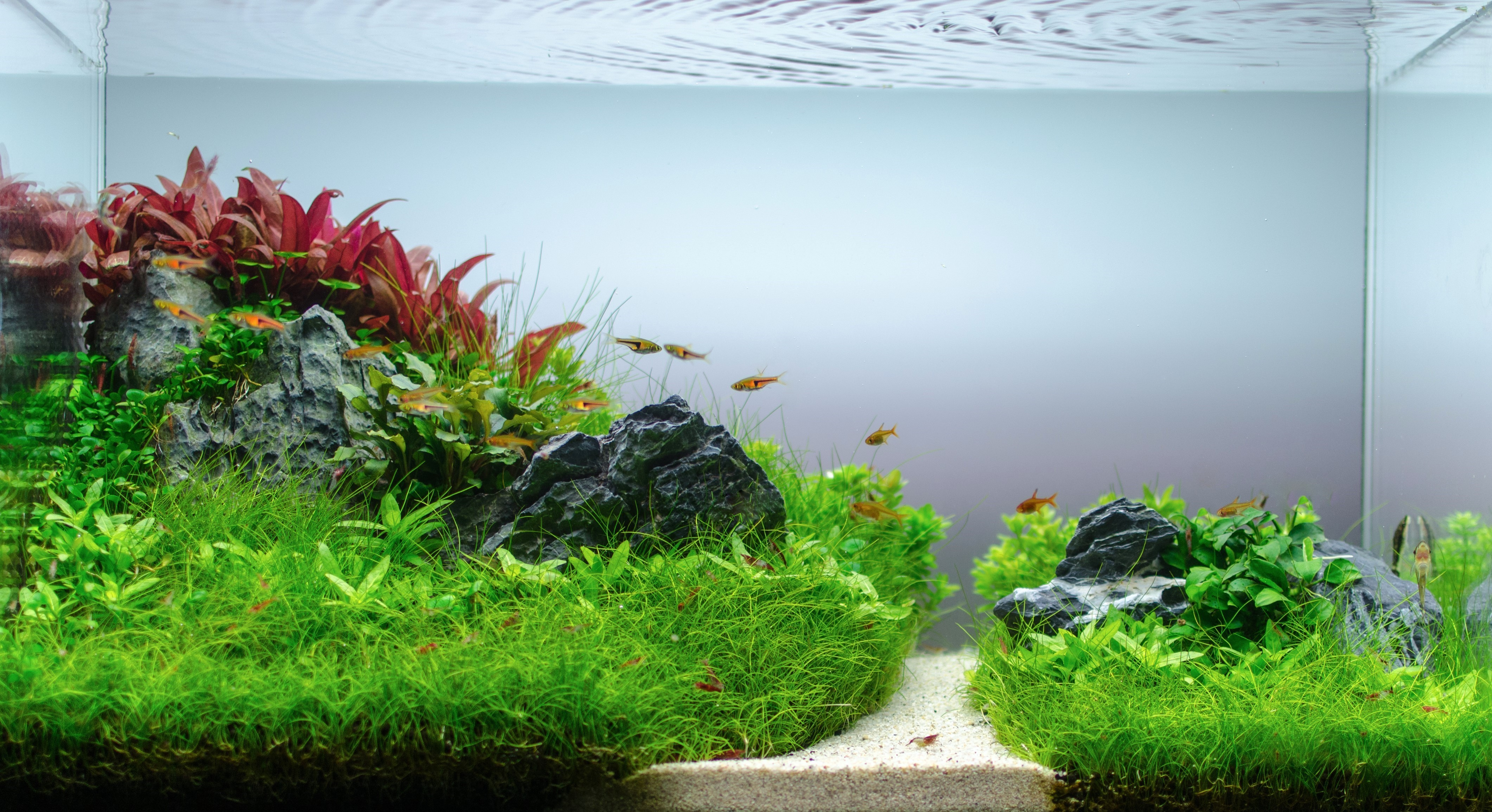 The World of Aquascaping & it's Positive Impact Thrive Global