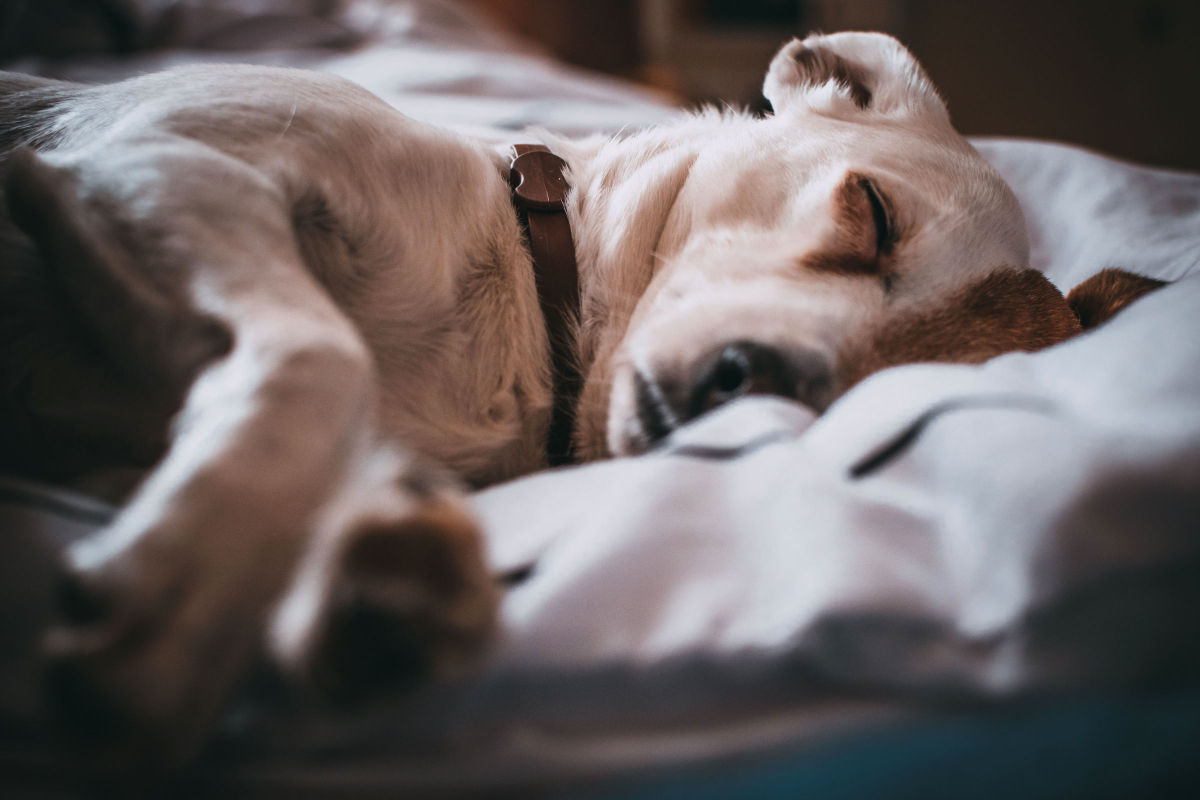 Image result for sleeping with dog