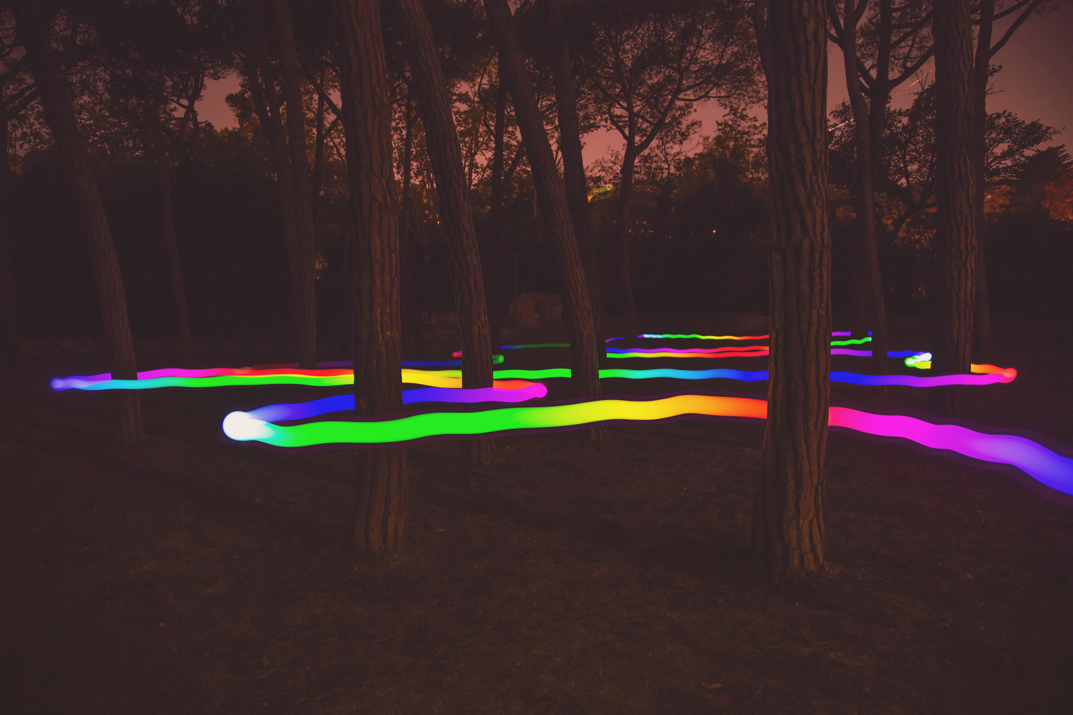 Light painting using technology with light trail with worm shape changing color and moving in between the forest.