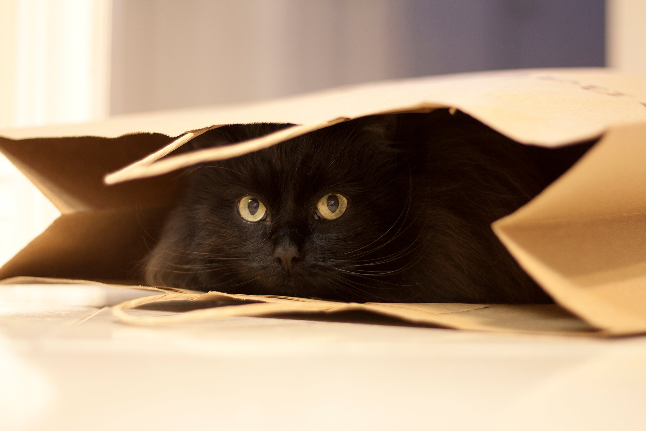 Black cat hiding in paper shopping bag with green eyes and whiskers peeking out.