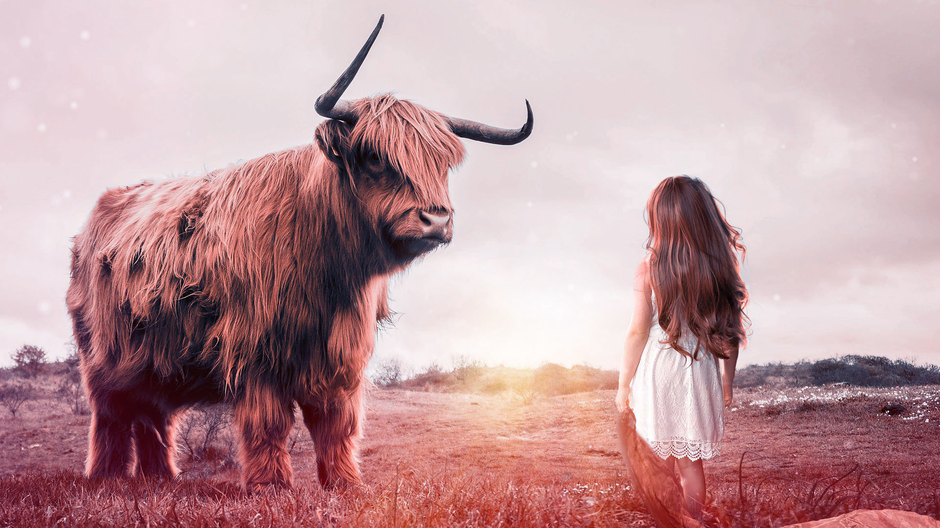 Brave girls stands up to bull
