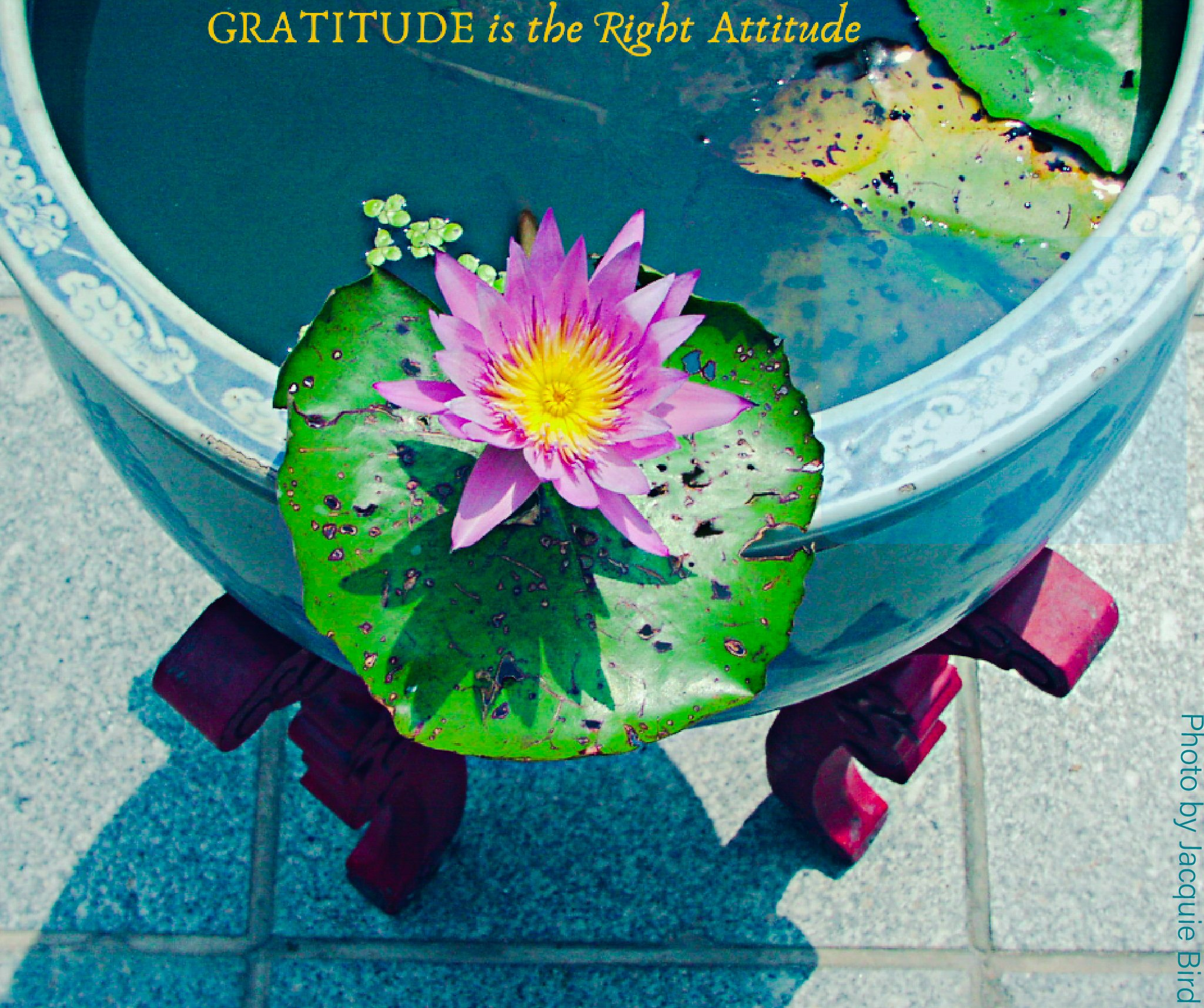 Gratitude is the right attitude by Jacquie Bird, Spiritual Wellness