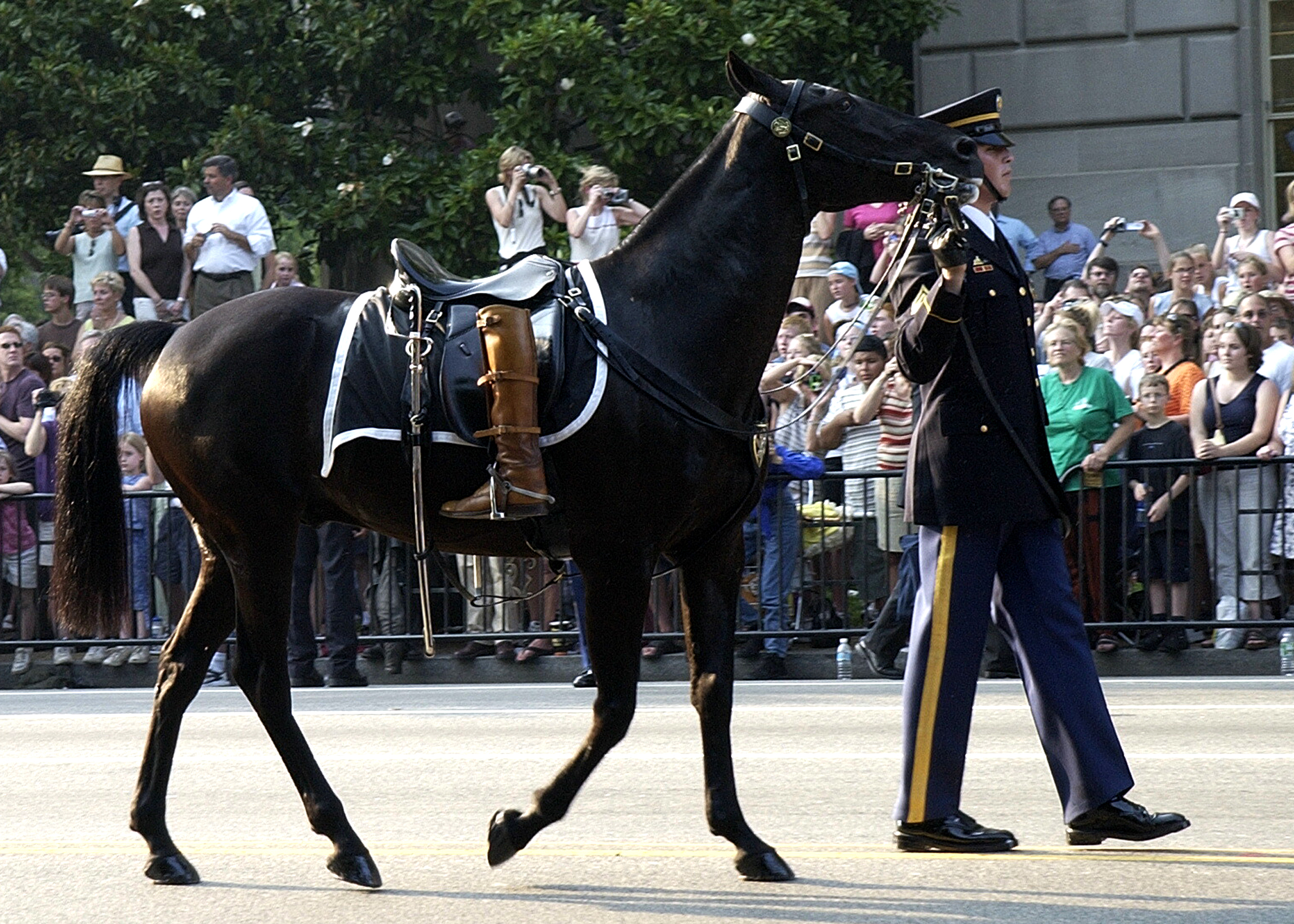 Symbolic of a fallen leader who will never ride again, the Caparisoned horse is led down Constitution Ave., following the Caisson carrying the body of former U.S. President Ronald Reagan during his procession to the Capitol Rotunda. U.S. Navy photo by Photographer's Mate 2nd Class Aaron Peterson (RELEASED). 040609-N-5471P-013 Washington, D.C. (Jun. 9, 2004)