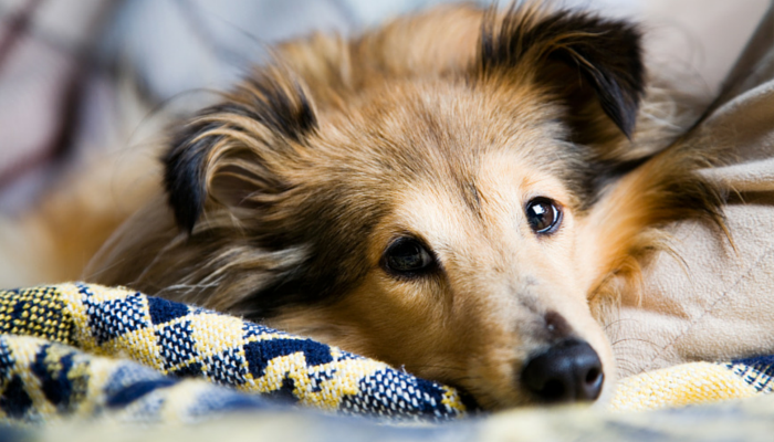 Remove Pet Hair from Home with These 9 Simple Tips