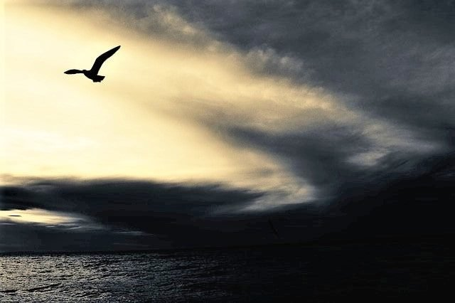 Dark flying bird contrasted against a bright yellow-white sky, staying ahead above dark water and ahead of dark clouds