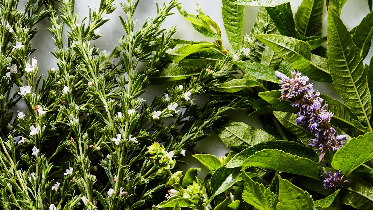 5 types of Herbs in Mexican Culinary Culture worth trying to Grow