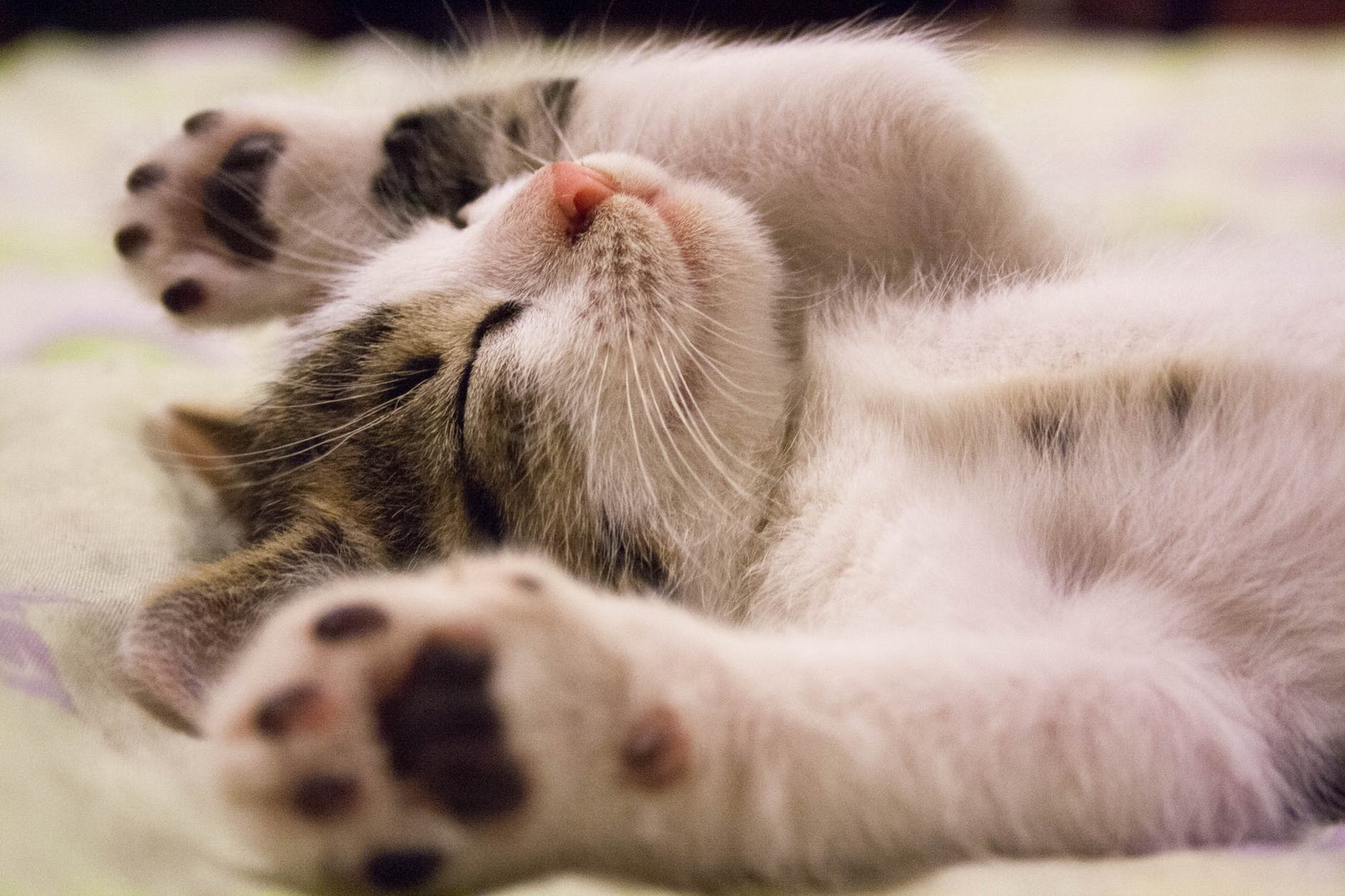 Cats Can Improve Your Mental Health