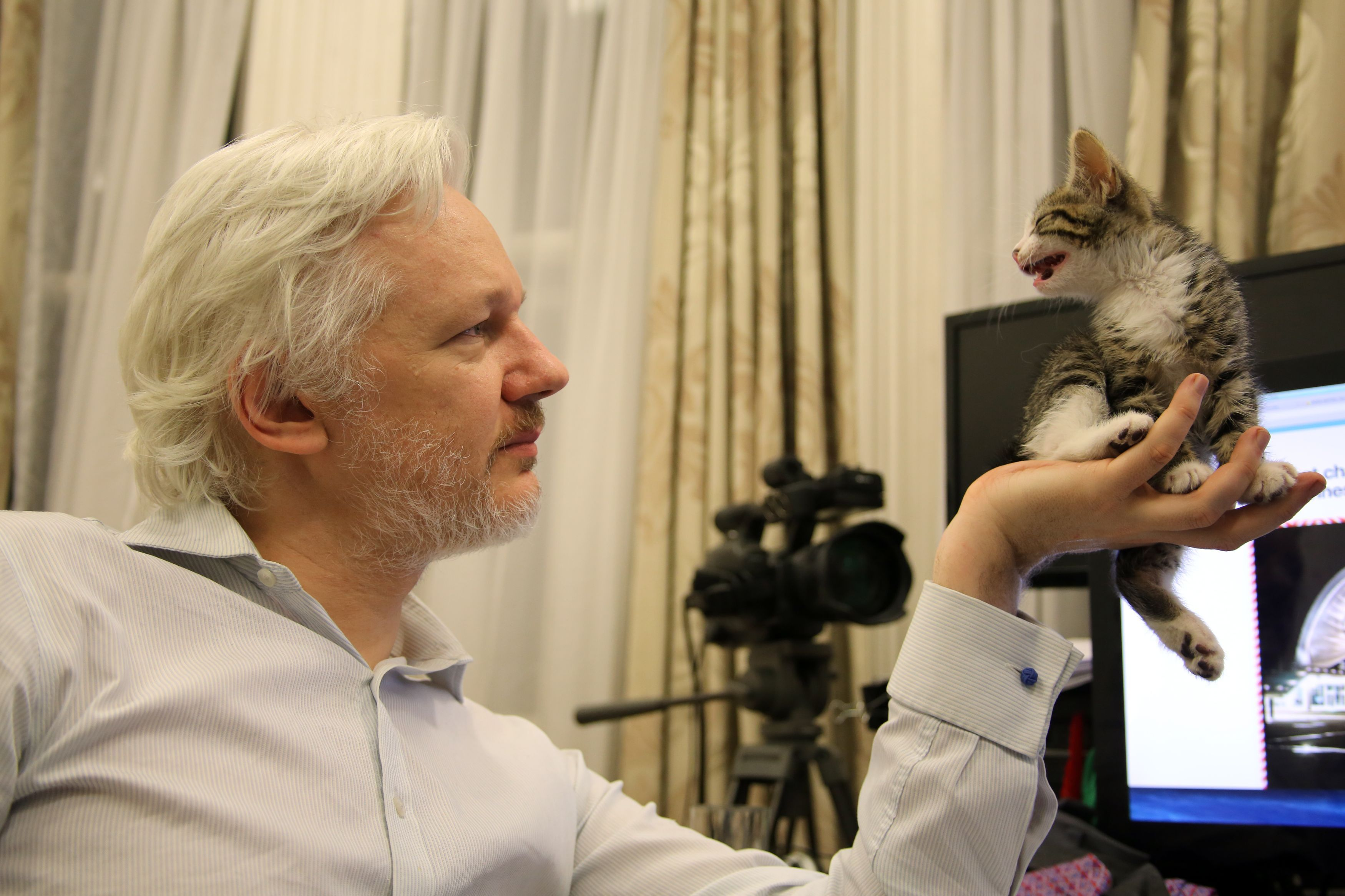 This is an undated handout photo issued by Sunshine Press made available Tuesday May 10, 2016  of WikiLeaks founder Julian Assange with a kitten in Ecuador's embassy in London . It may not be so lonely for WikiLeaks founder Julian Assange in the embassy quarters he's called home for nearly four years. Now he has a kitten to keep him company.The kitten had not been named yet. (Sunshine Press/Wikileaks via AP)