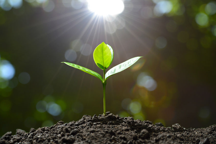 Image result for plant the seed and they will grow