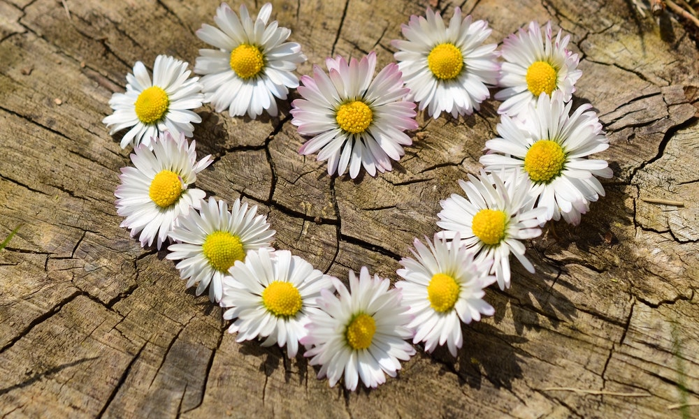 Positive Mental Health Benefits of Flowers That you Didn\u0027t
