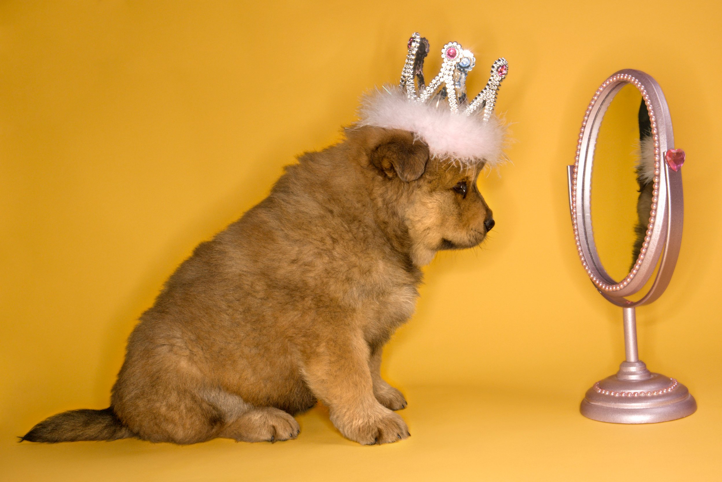 puppy-in-mirror-was-i-raised-by-narcissists