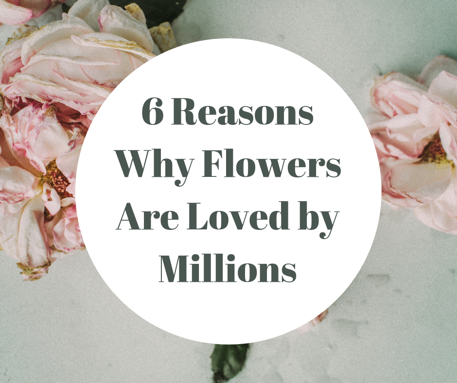 6 Reasons Why Flowers Are Loved by Millions