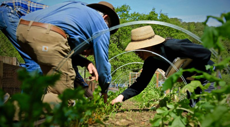 The mission of NewTree Ranch to bring people into nature to experience the principles of Biodynamic farming. Photo credit David Rountree.