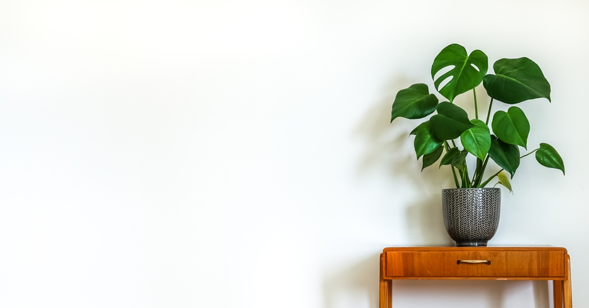 Microstep for Well-Being: 5 Reasons To Bring a Plant To Work