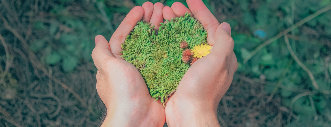 Hands holding green grains in a heart shape