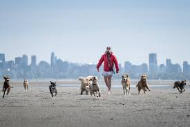 How to make your daily dog walk happier For you and your d