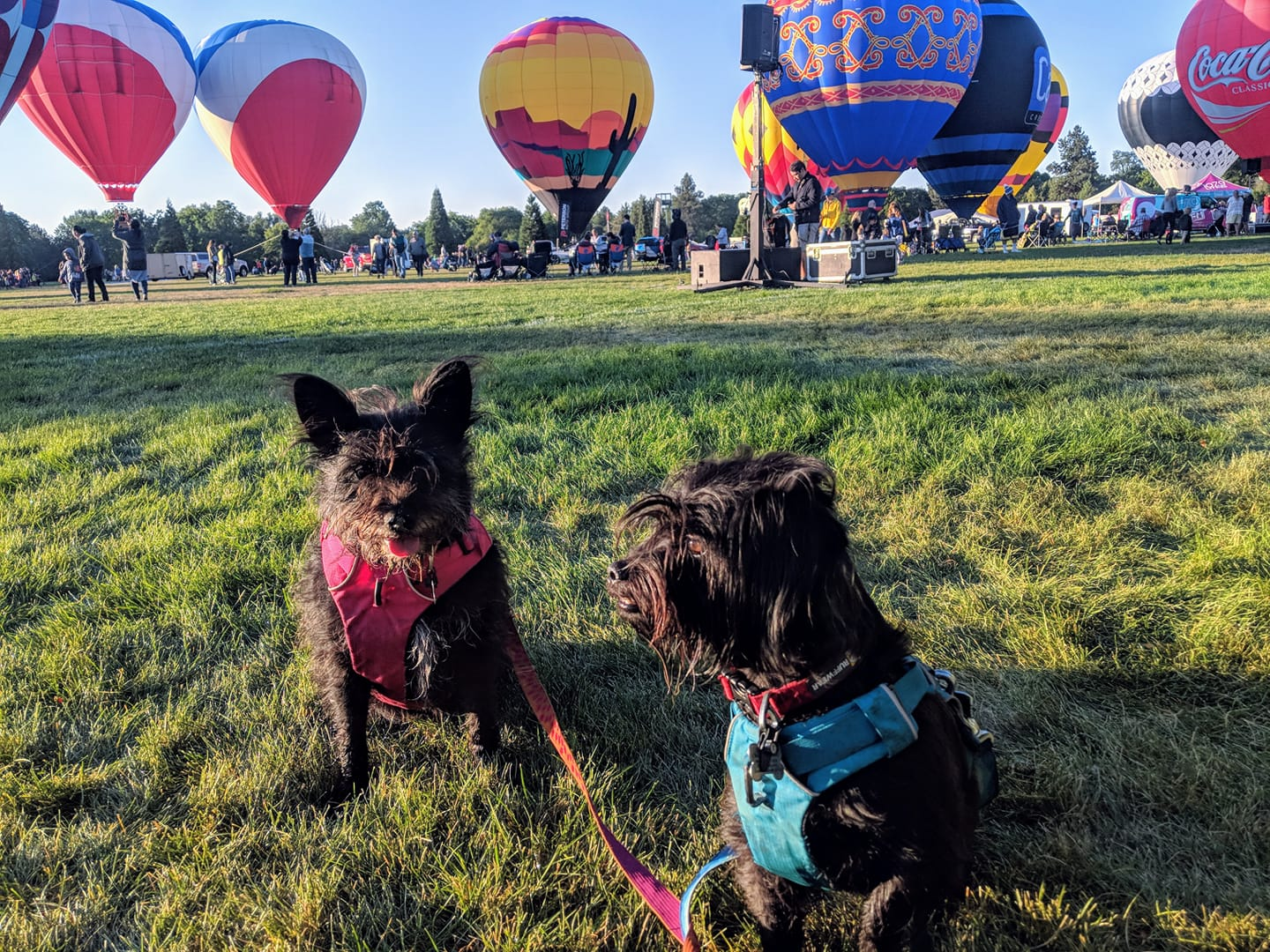 Field trip with Buddy and Cheyenne to see hot air balloons.