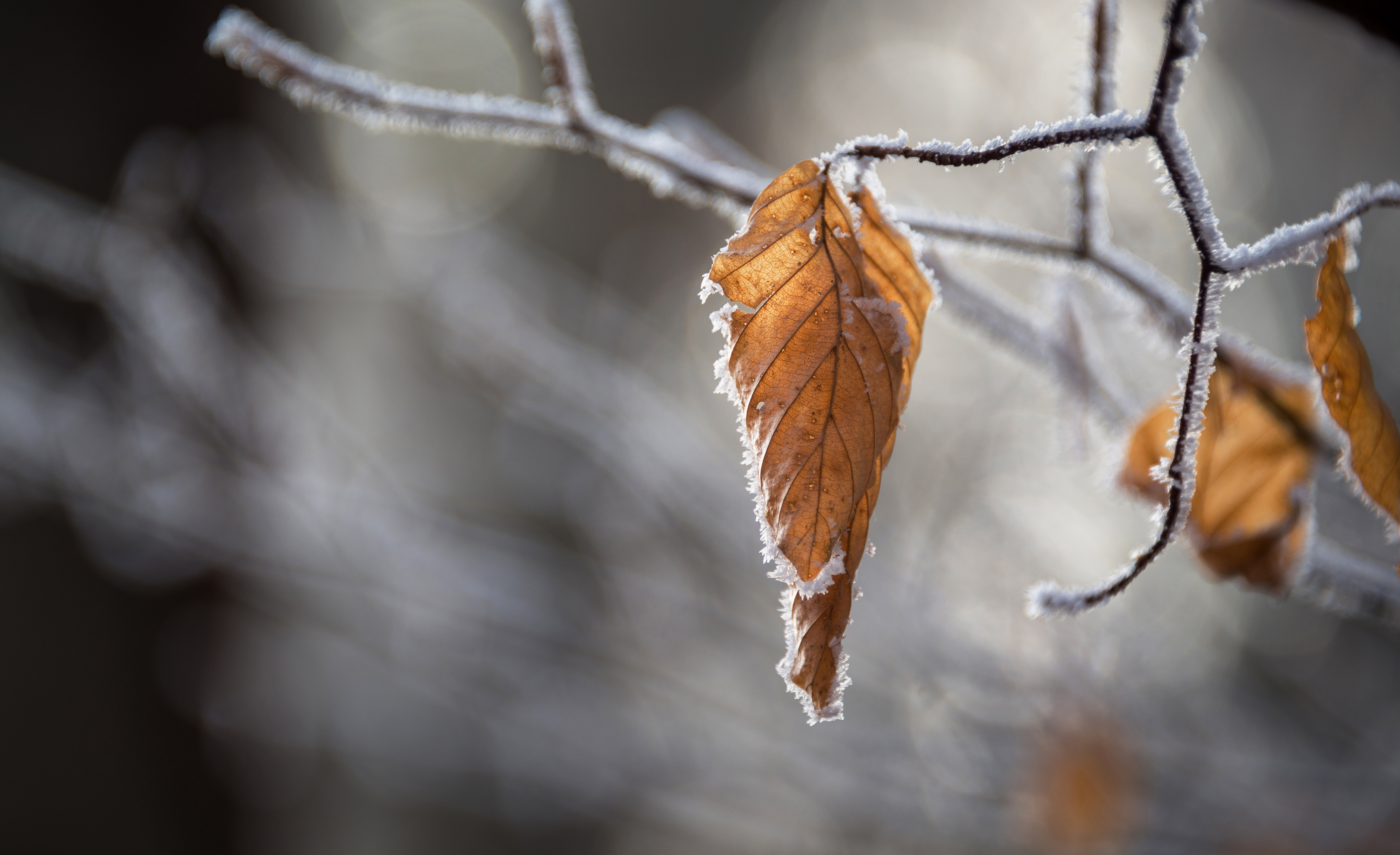 dried leaves in winter
