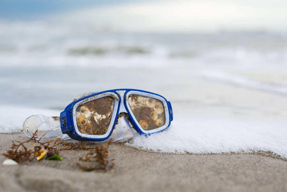 Barnacles attached to a pair of snorkling goggles that washed up on Satellite Beach, Brevard County, Florida, USA.