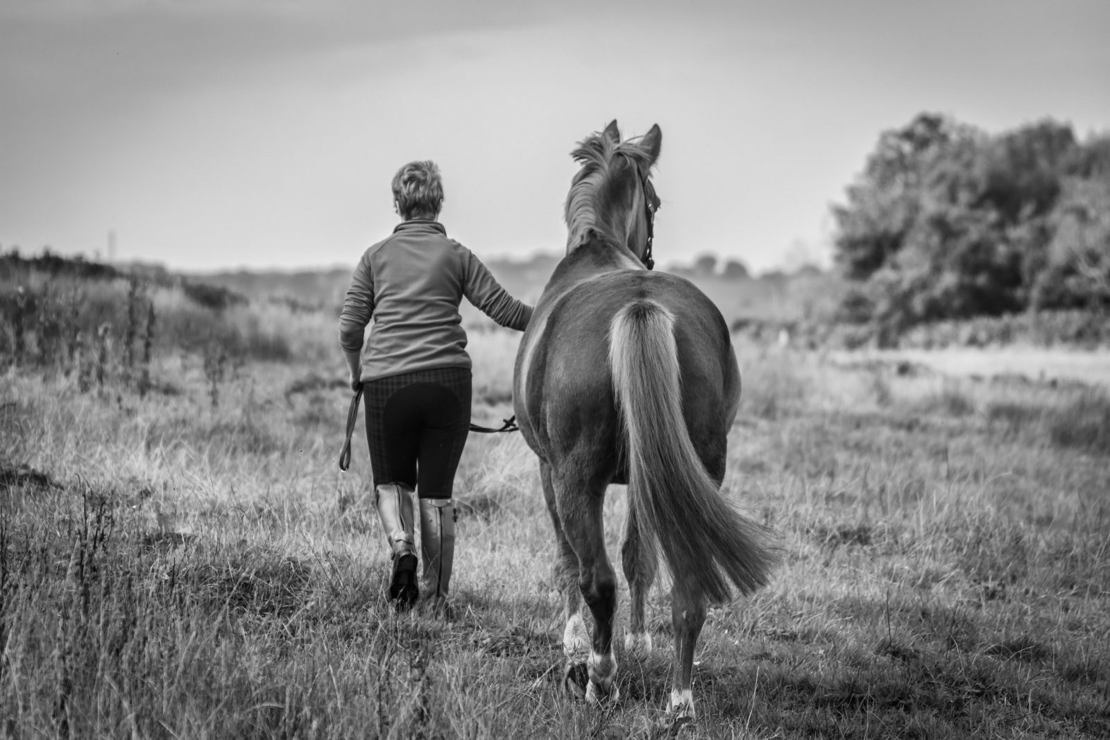 Is equestrianism a perfect environment for burnout?
