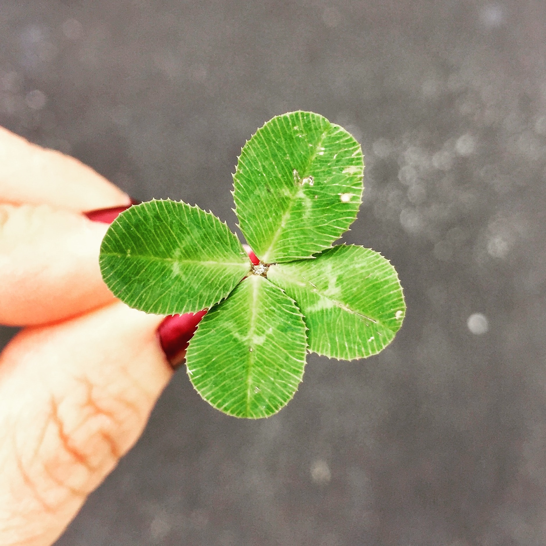 There is an equal amount of good luck as bad luck waiting for you. Photo by Amy Reed on Unsplash