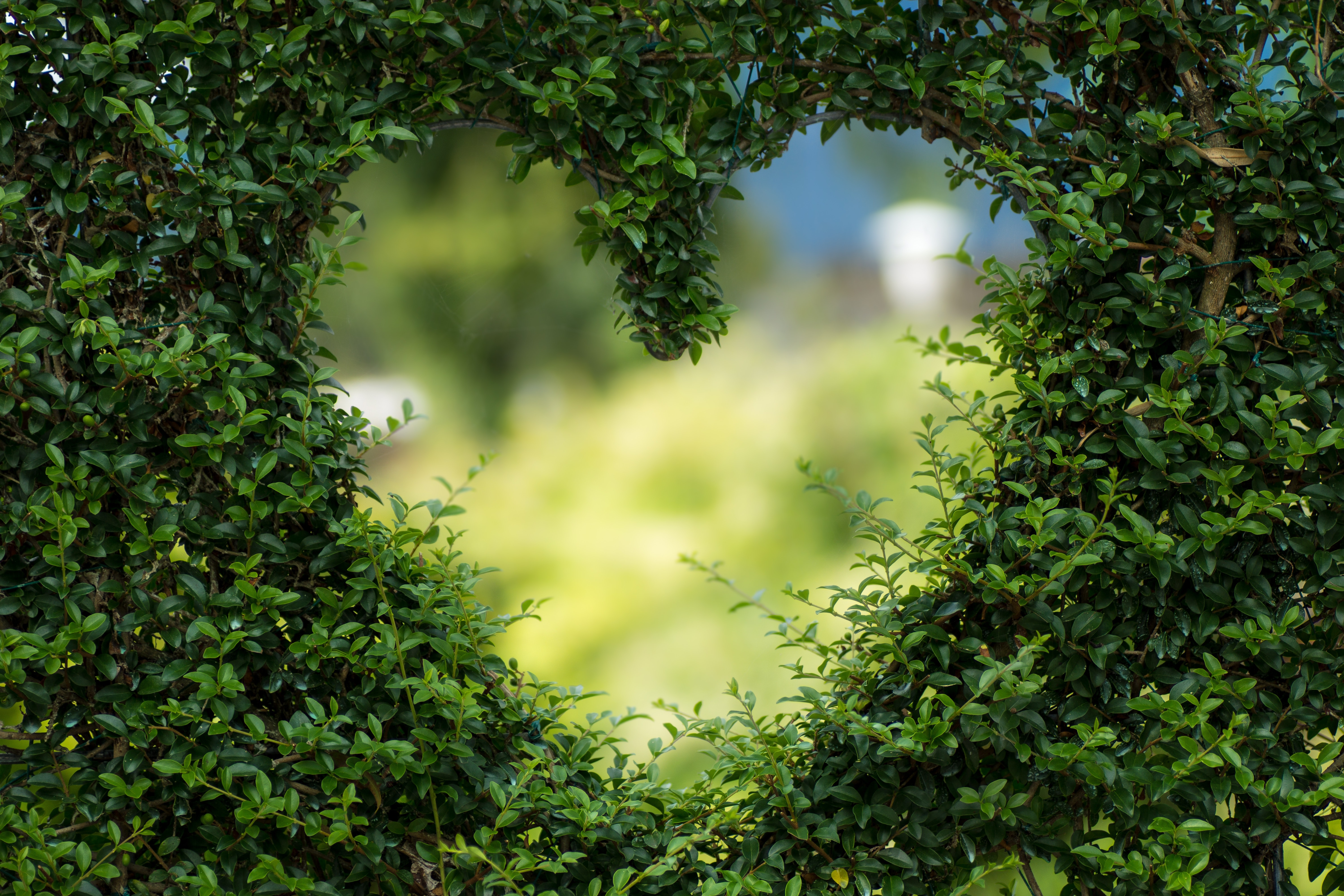 heart-in-hedge-unconditional-love-supportiv