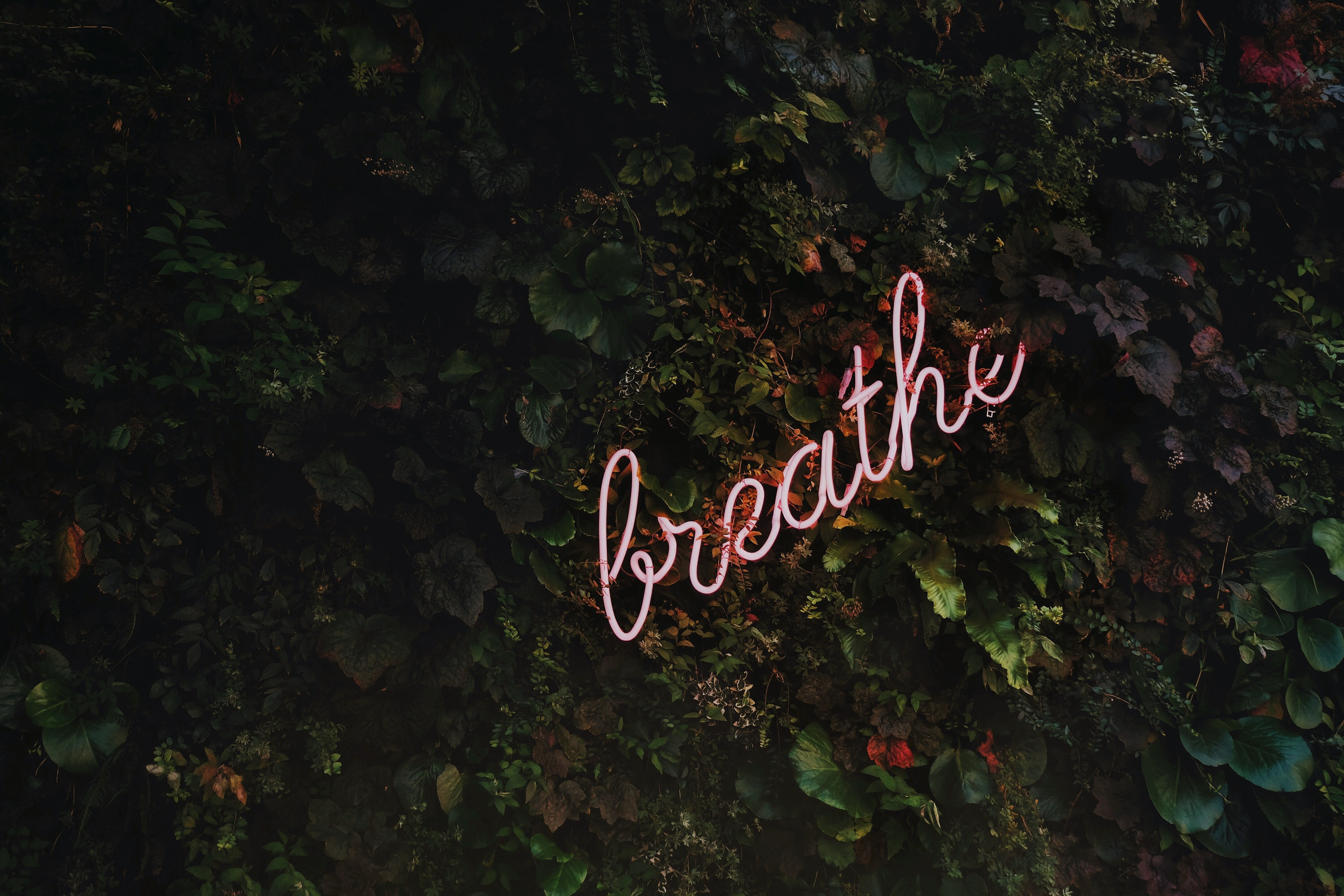 Fuel your body and mind: breathe more, stress less. Photo by Tim Goedhart on Unsplash.