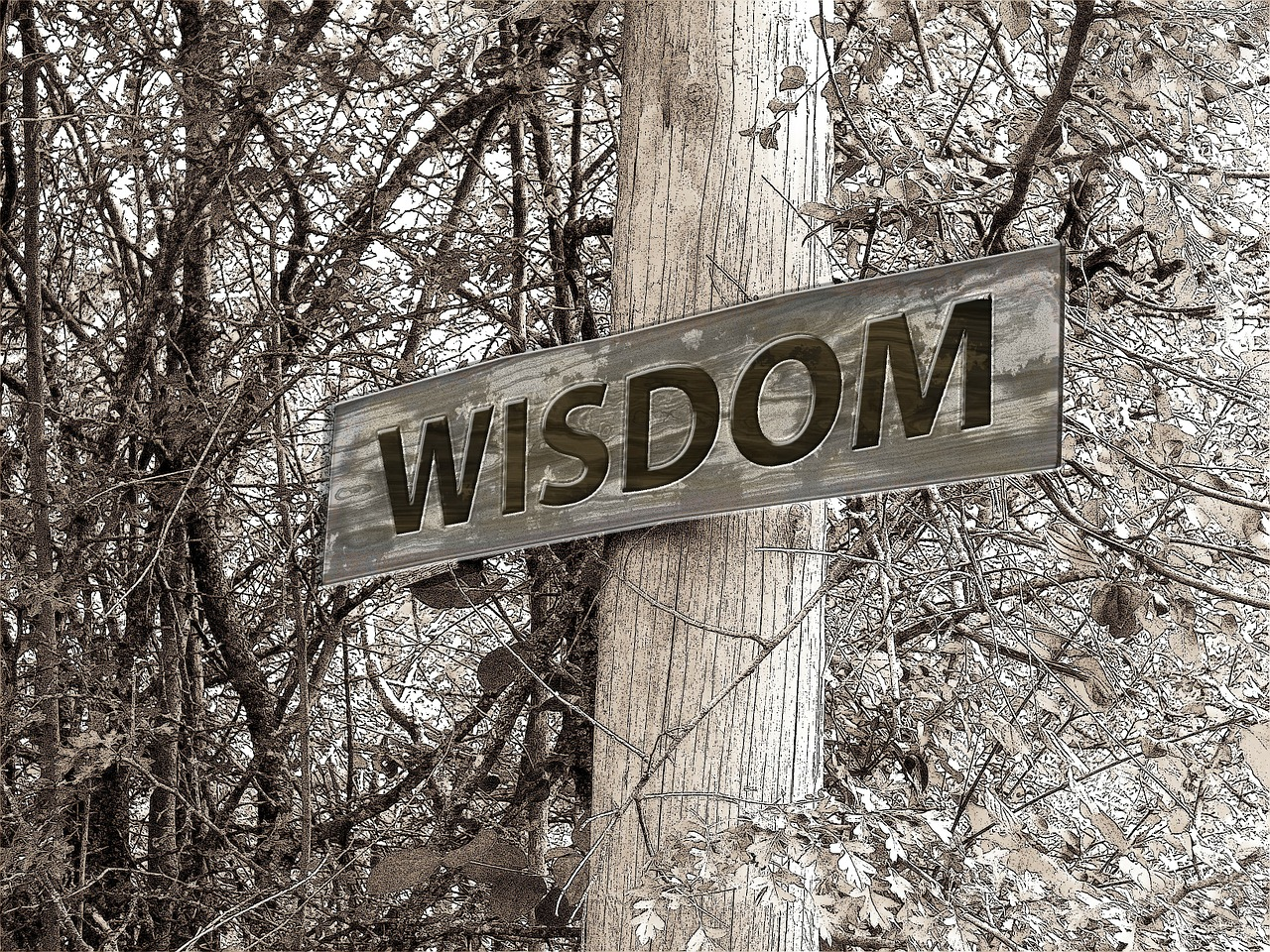 Wisdom sign on a tree in the woods