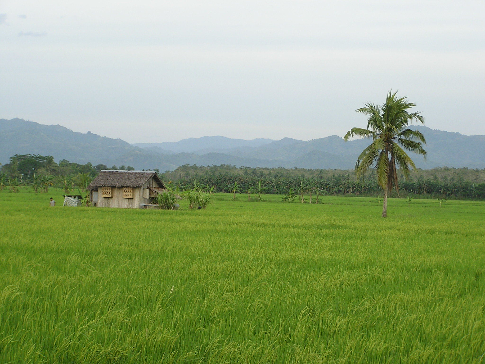 Simple living in a tropical climate.