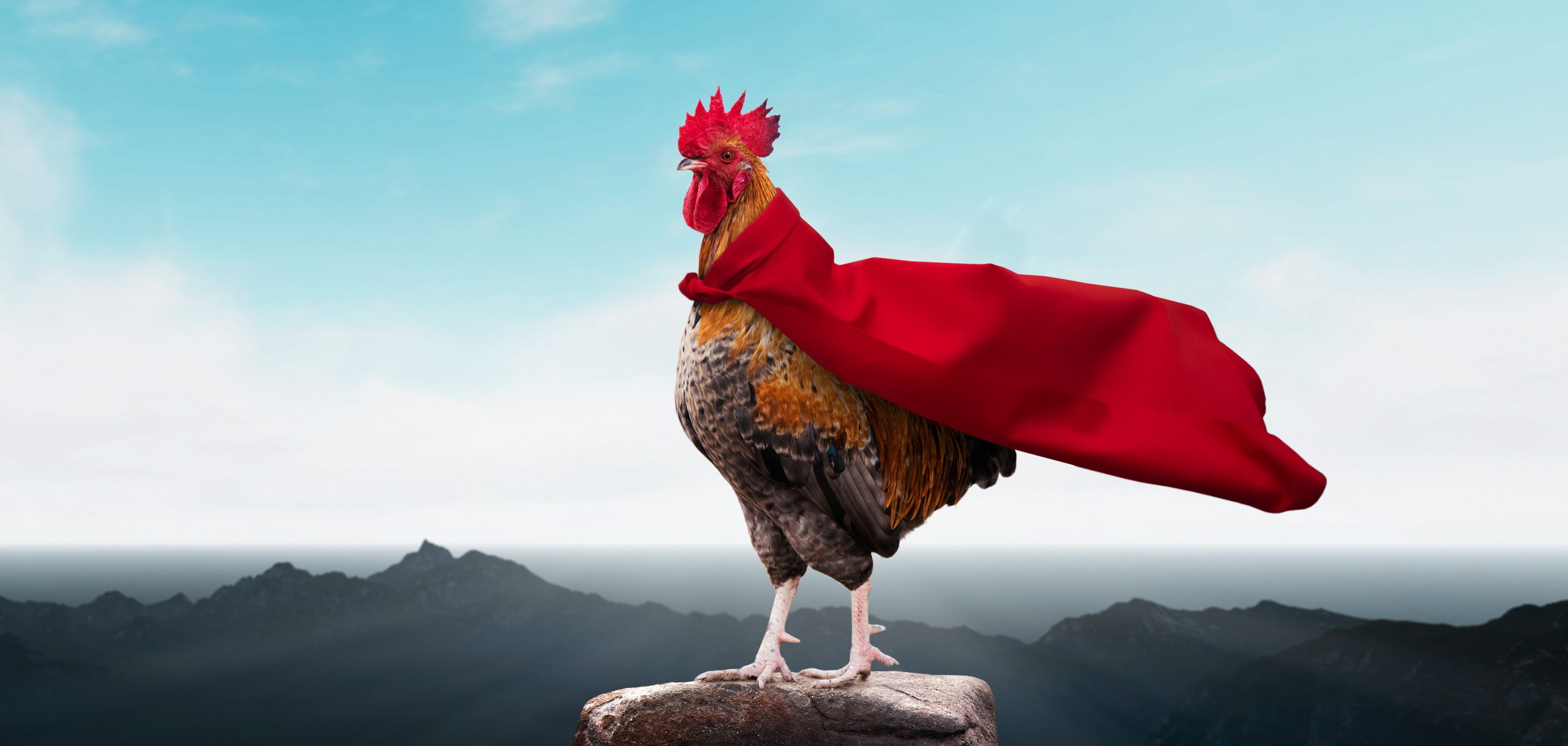 Chickens to the rescue!