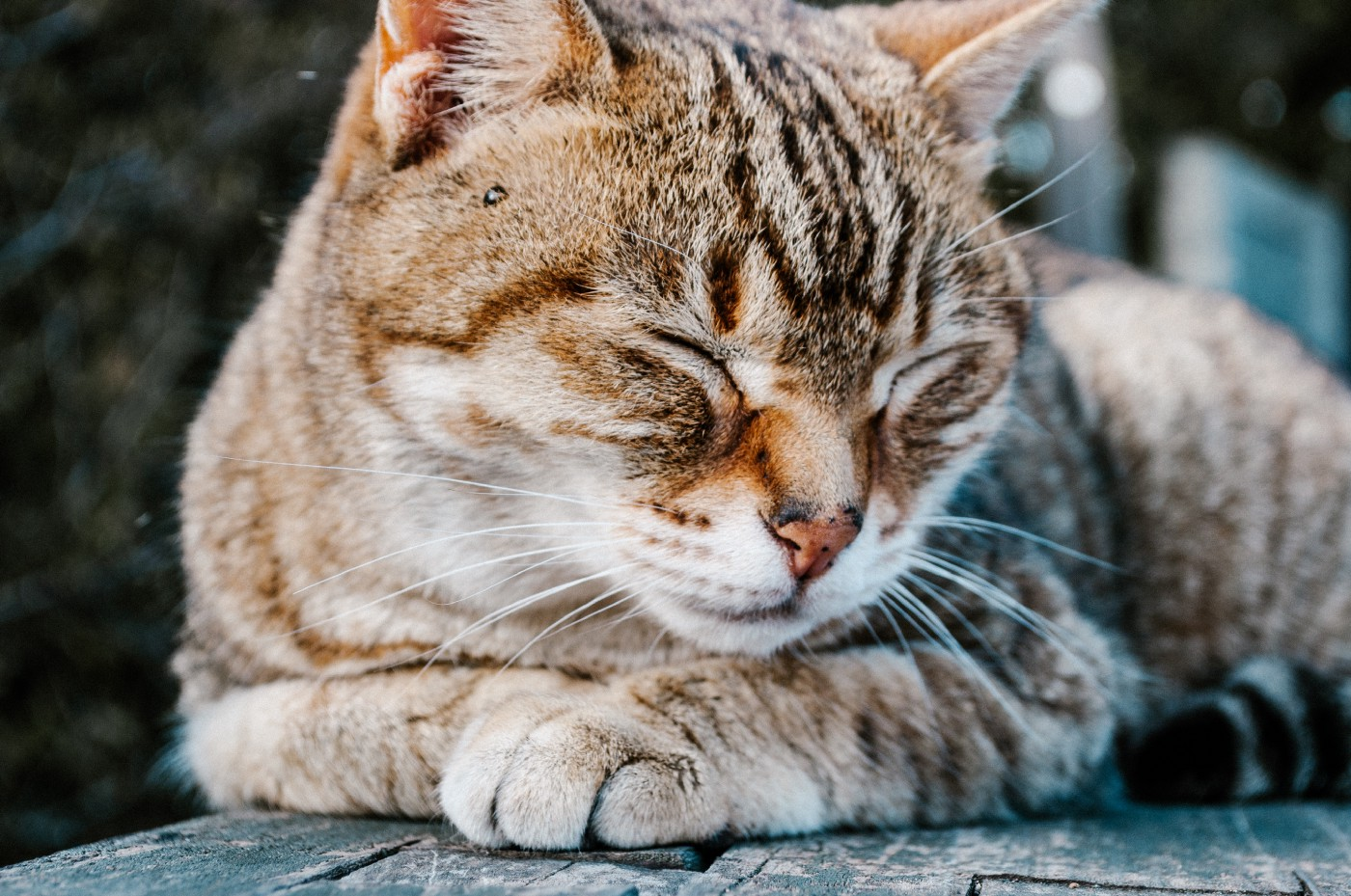 A relaxed cat with its eyes closed