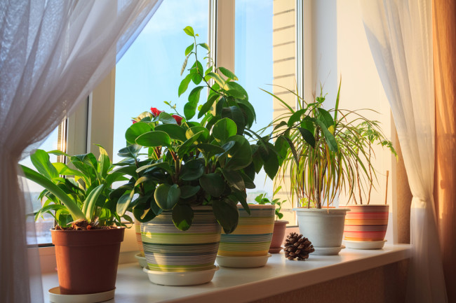 Health Benefits of Plants Around the Home