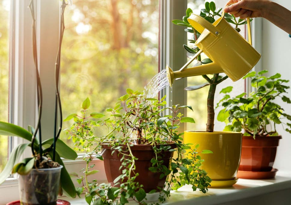 Indoor Plants Helps Improve Mental Health