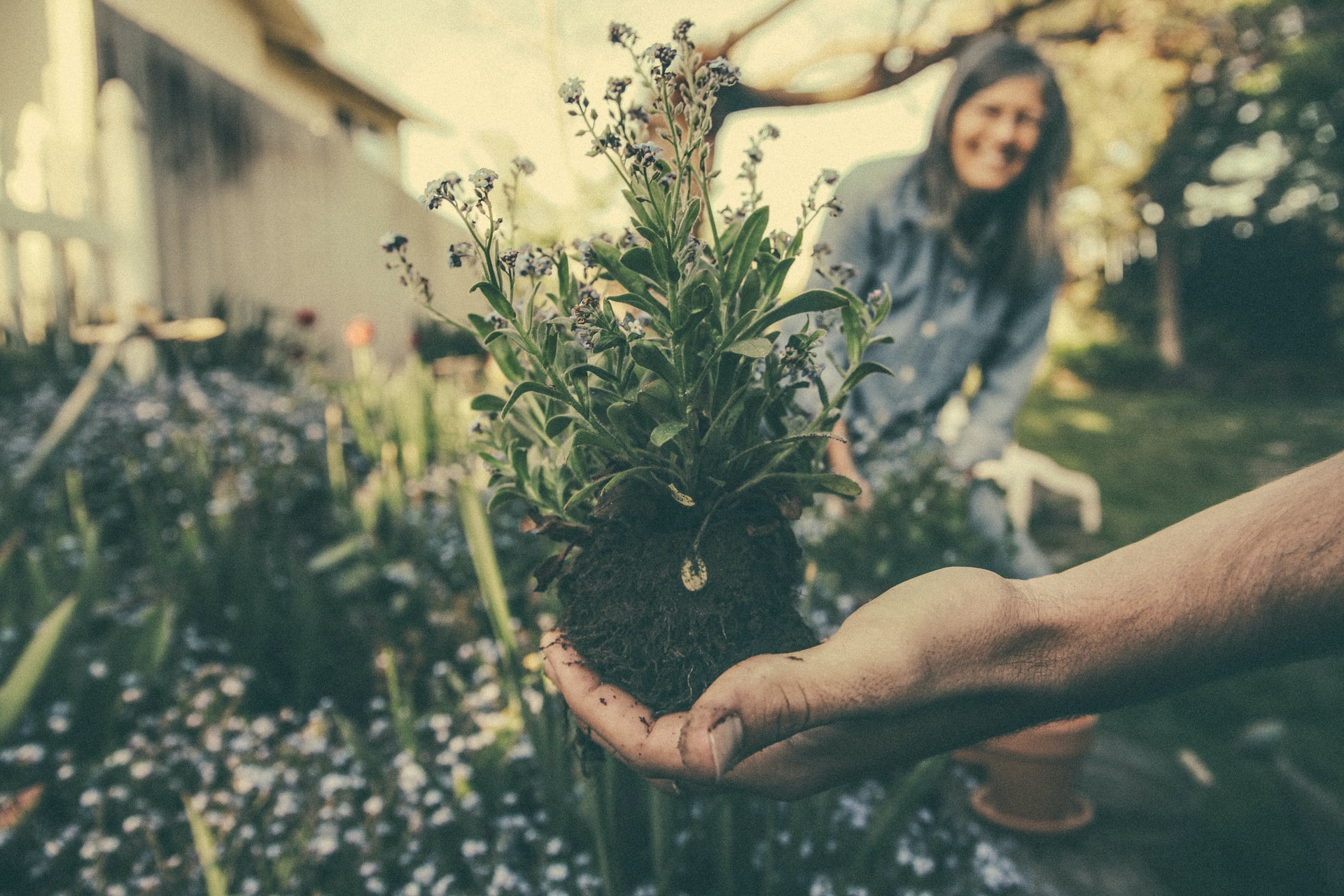 Gardening is good for wellbeing