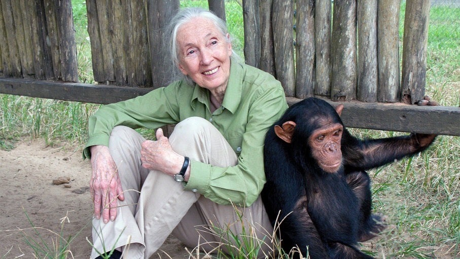 Credit: The Jane Goodall Institute