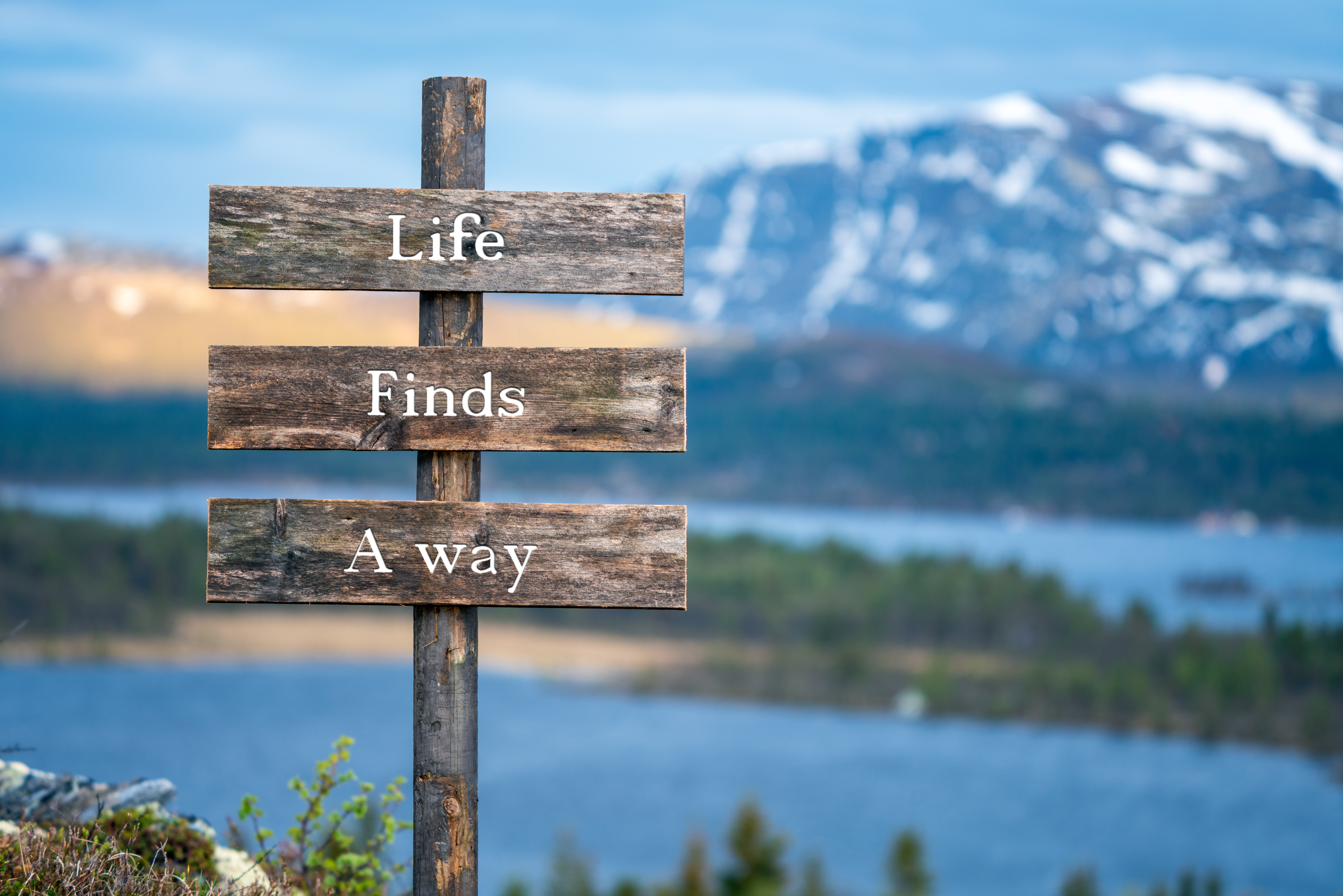 life finds a way text on wooden signpost outdoors in landscape scenery during blue hour. Sunset light, lake and snow capped mountains in the back.