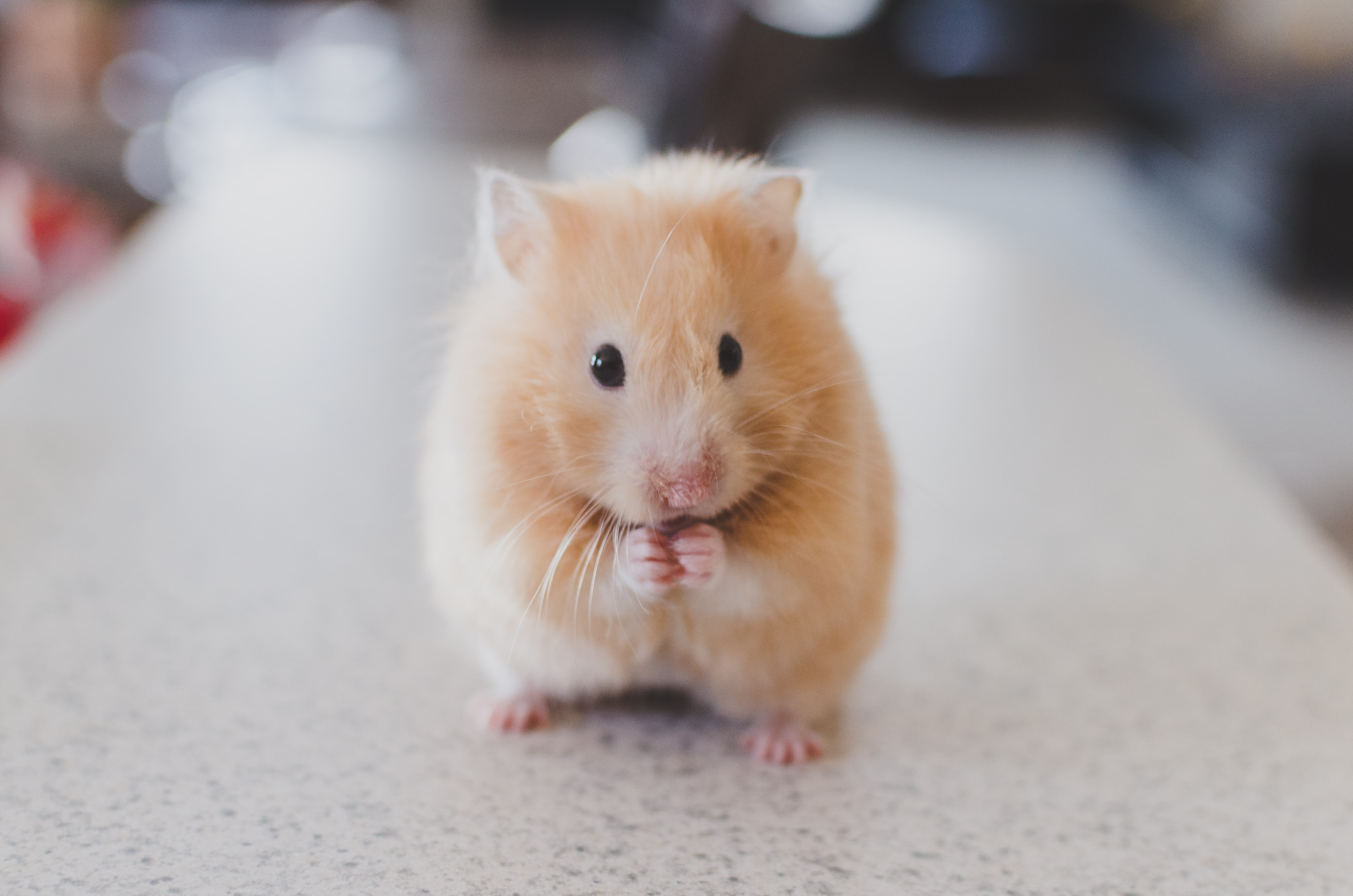 The Role of the Classroom Pet - Shannon Burton