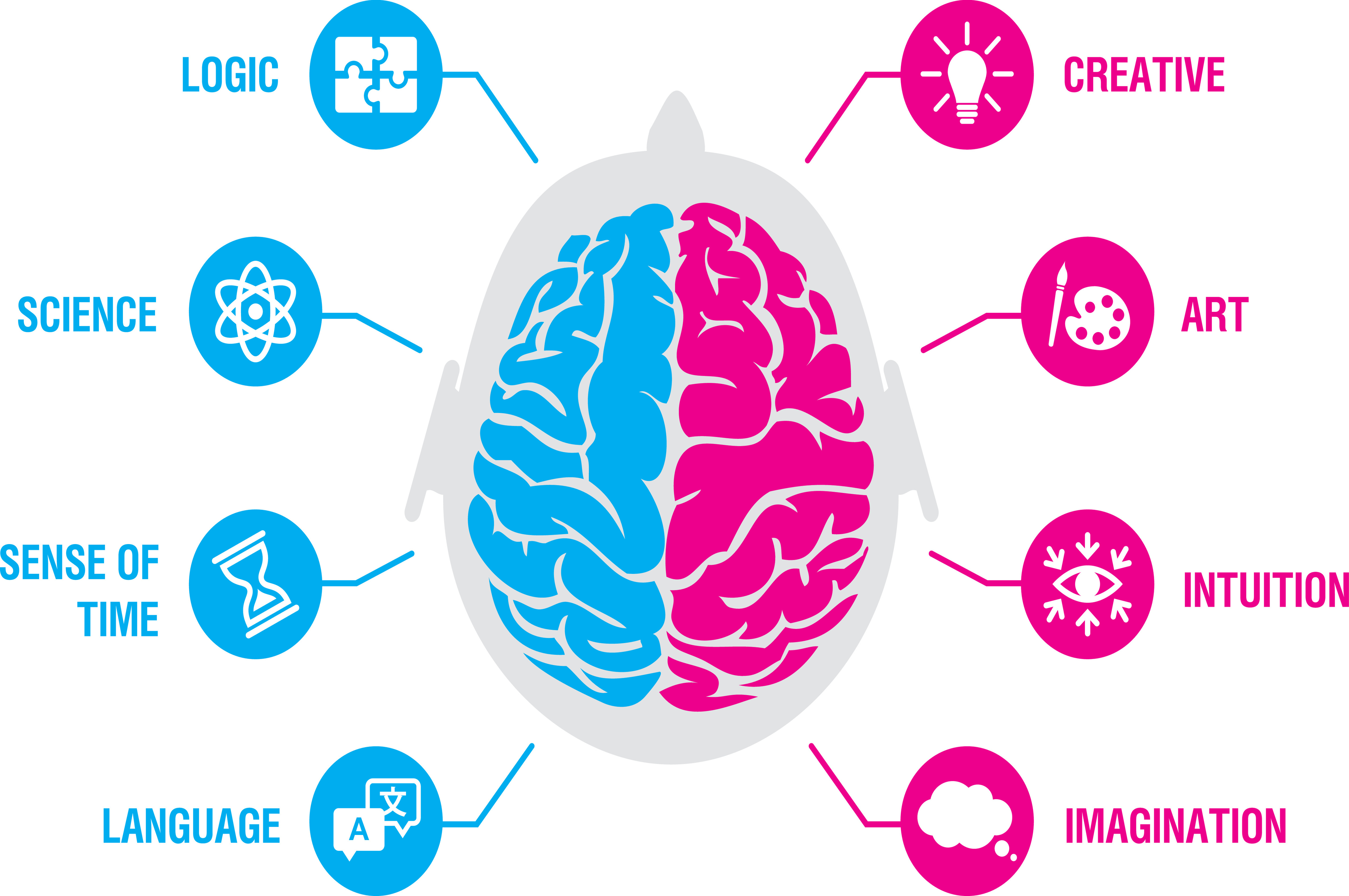 Brain map illustrating the roles of the left and right side of the brain.