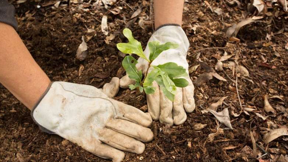 Planting trees can engage employees