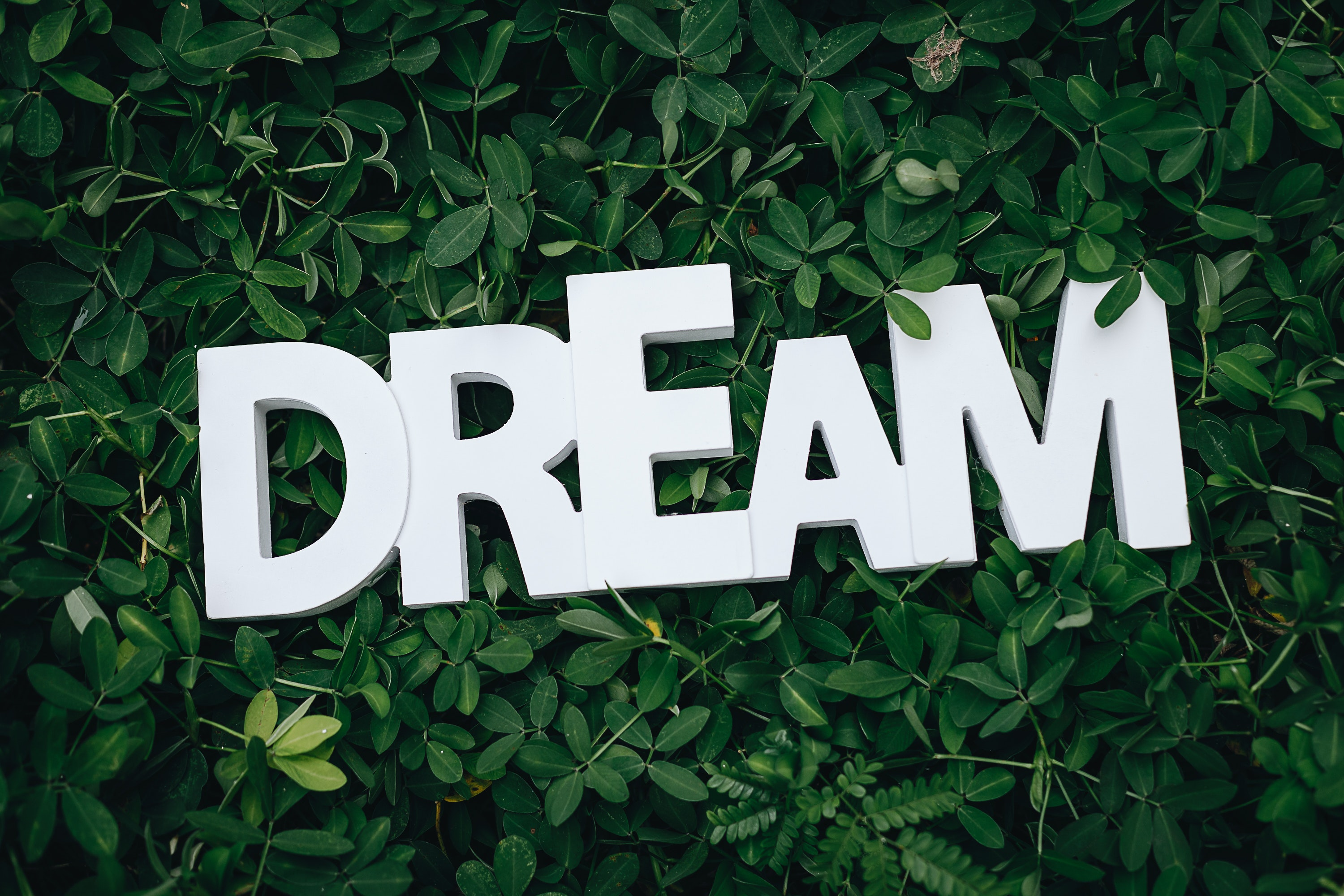 The word Dream on a background of leaves