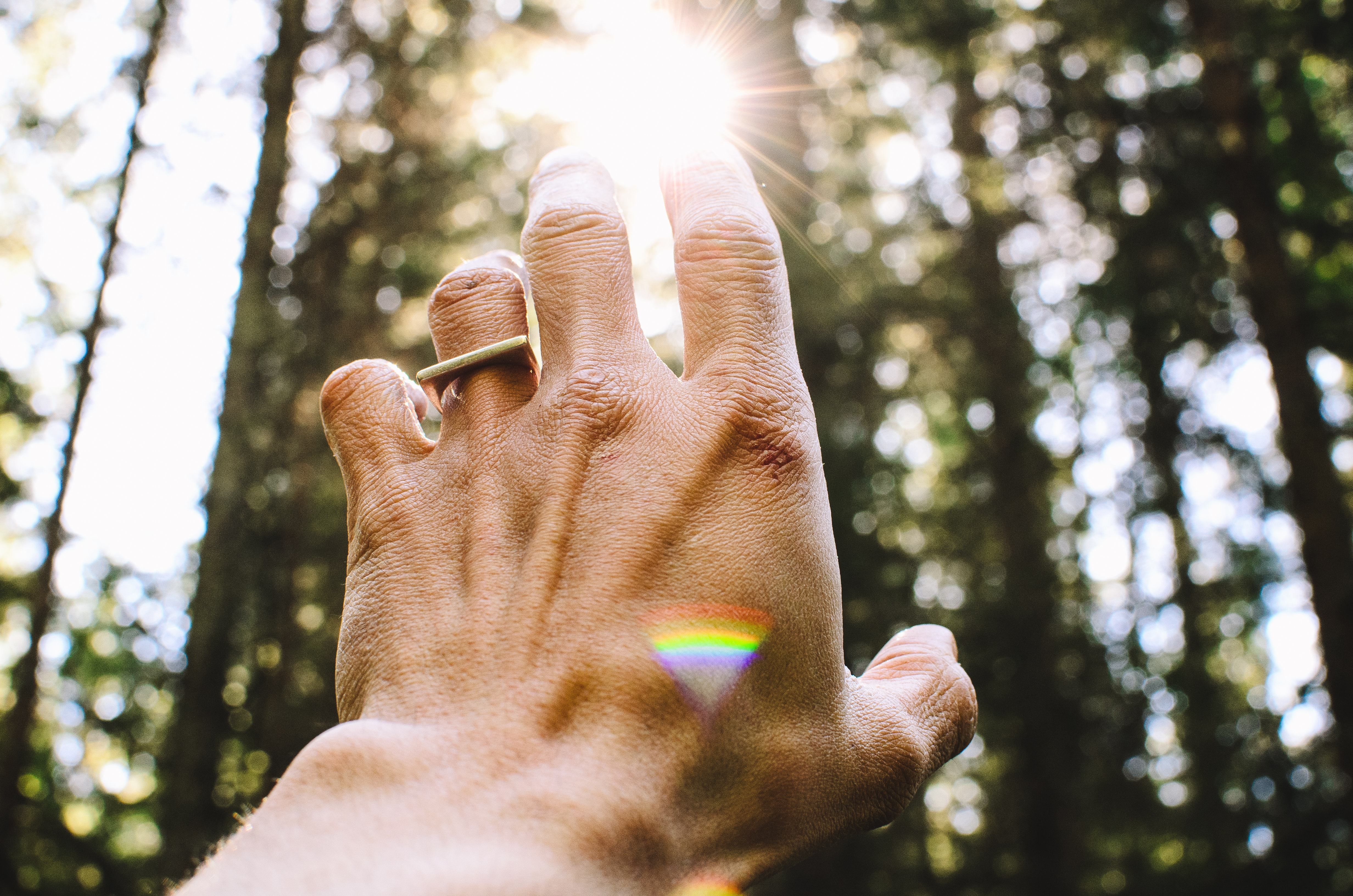 An outstretched hand reaching for dappled sunlight between tall trees