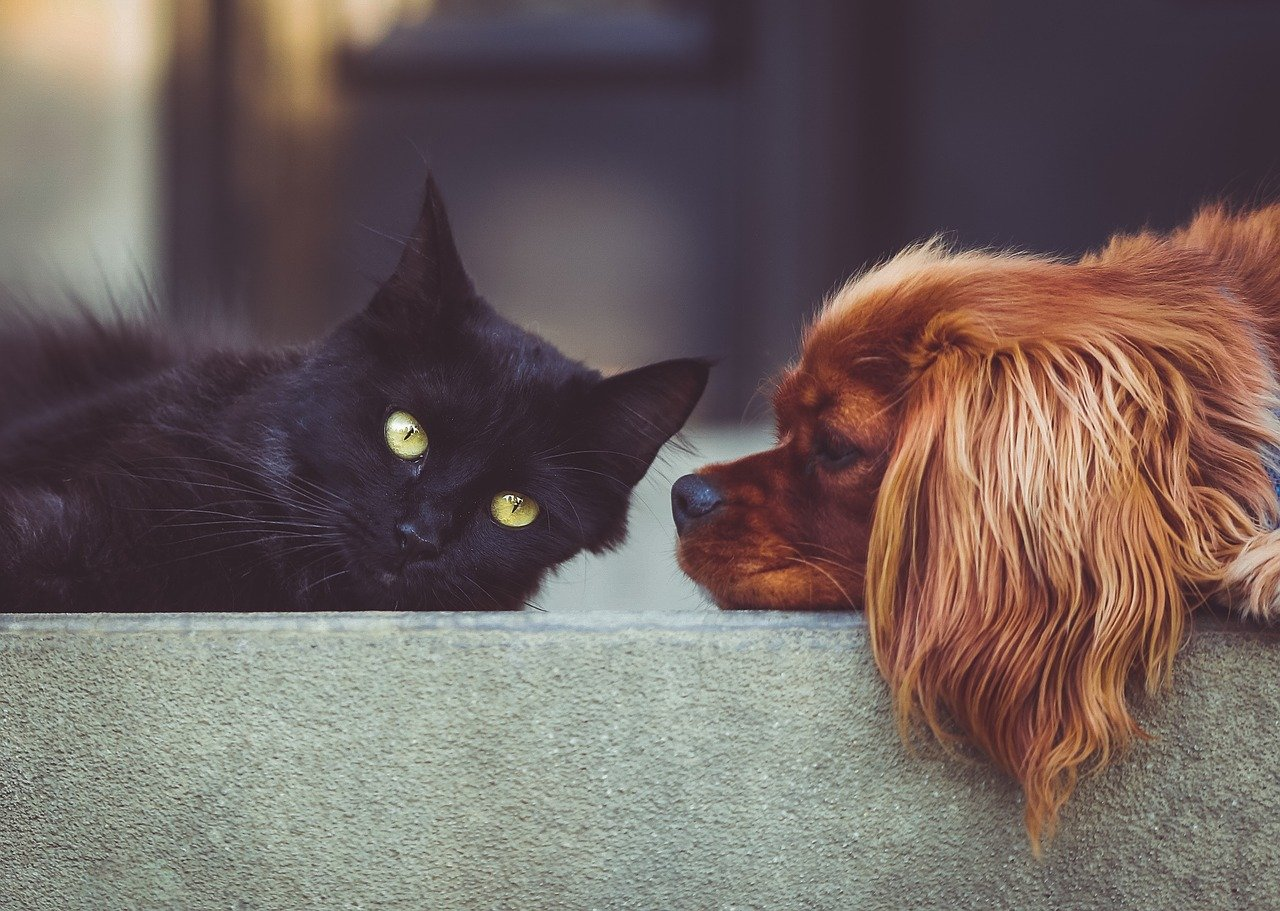 Headshot of a black cat and a dog lying on the concrete floor side by side
