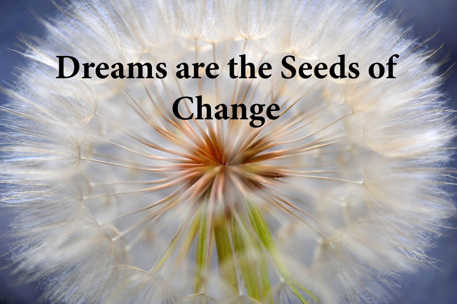 Dreams are the Seeds of Change with Marcus