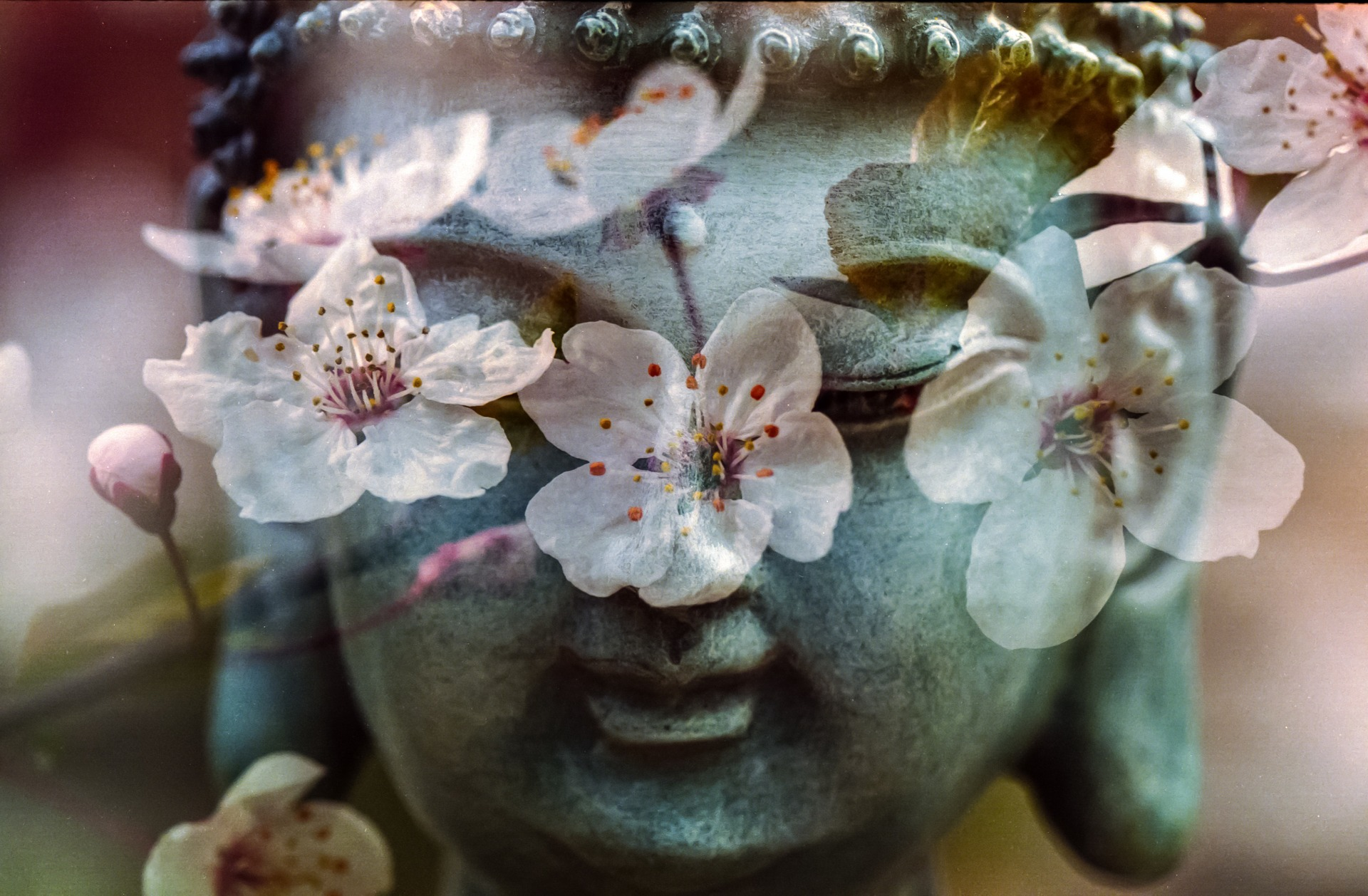 A buddha head statue superimposed by delicate flowers