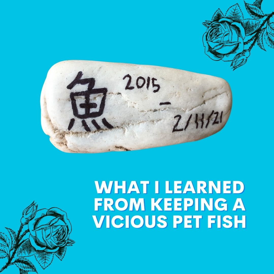 What I Learned from Keeping a Vicious Pet Fish - Dr. Ivy Ge