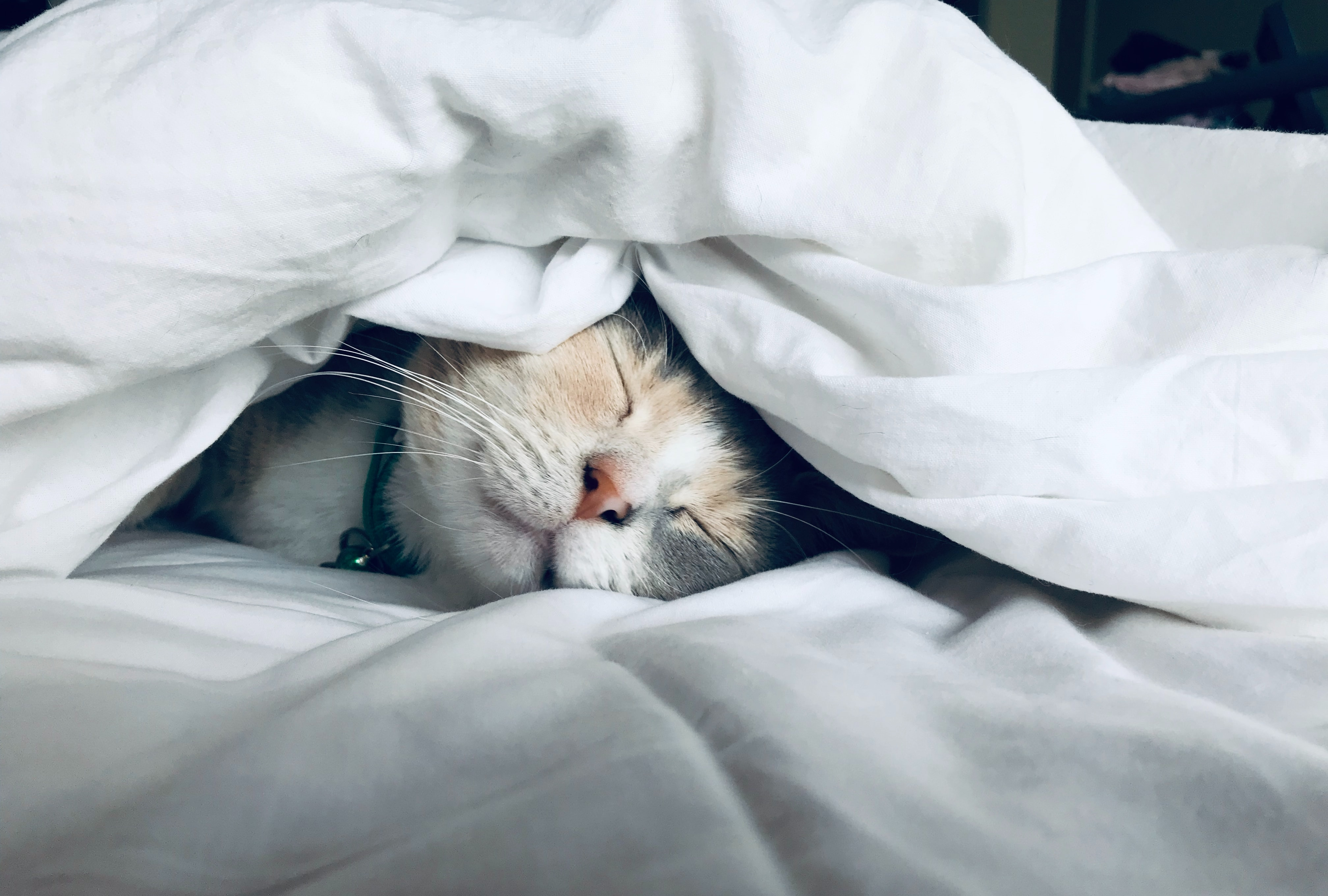 Picture of sleeping cat