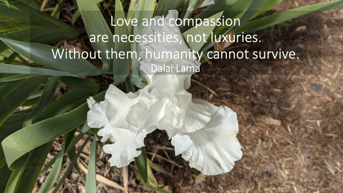 Love and compassion are necessities, not luxuries. Without them, humanity cannot survive. Dalai Lama