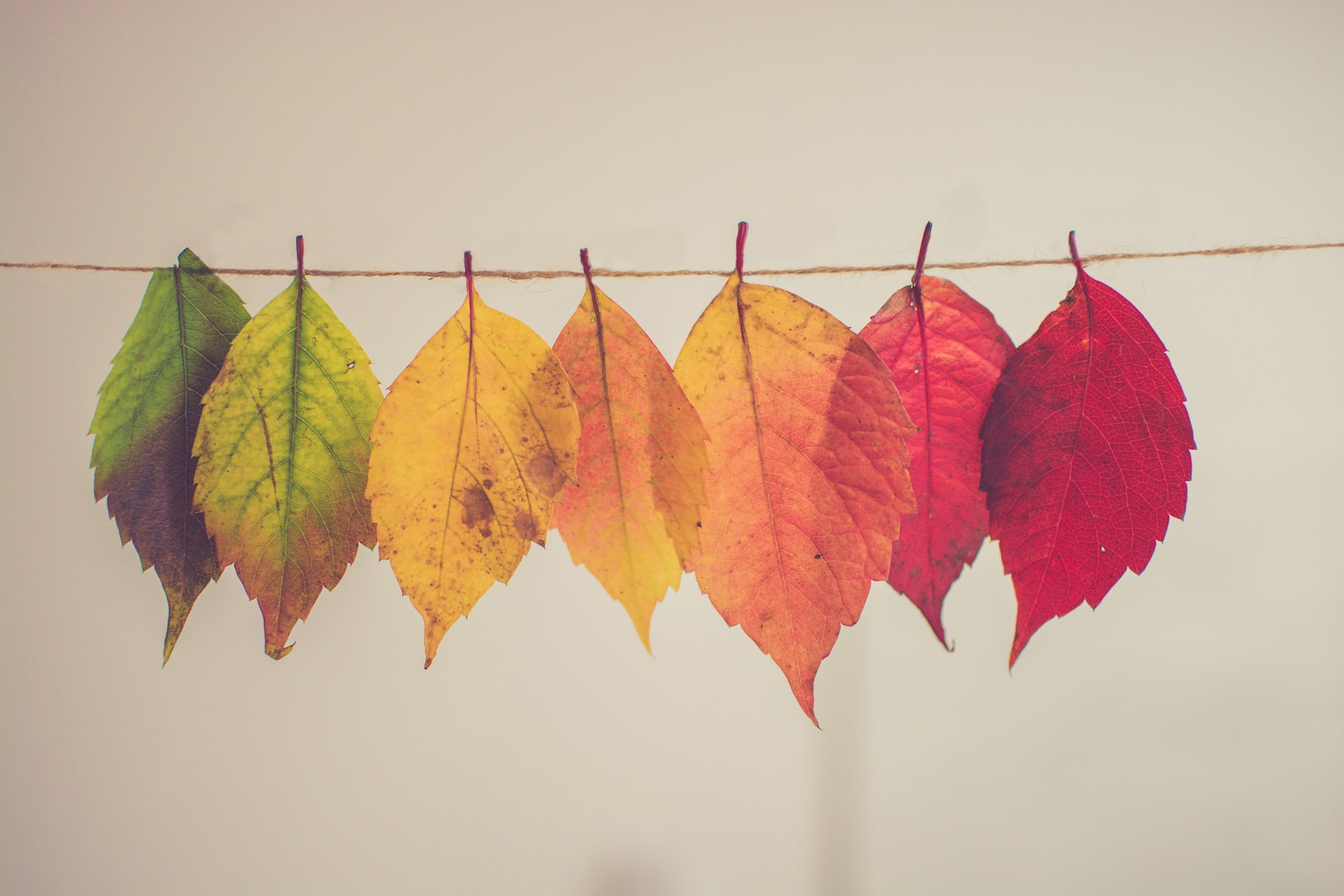 Leaves in different shades and colors due to season change