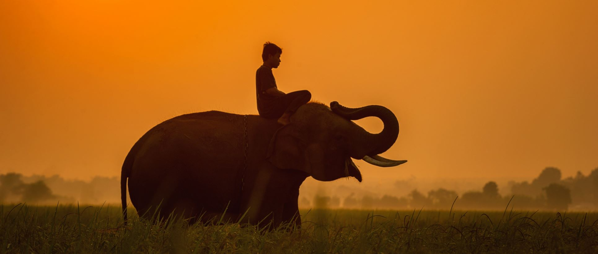 Rider and Elephant in Sunset